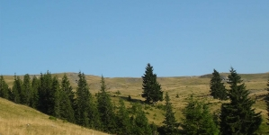 Drumul spre Vozia. Cei trei şi Pădurea cea Mare. Precuvântare