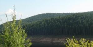 Drumul spre Vozia. Cei trei şi Pădurea cea Mare. Capitolul IV