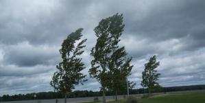 Mă bate vântul