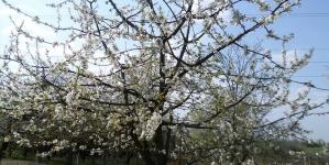 Pe primăvară