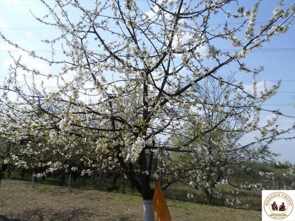 Libertate-n primăvară