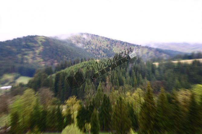 Drumul spre Vozia. Cei trei şi Pădurea cea Mare. Capitolul I