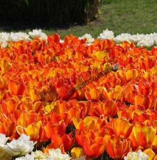 Florile codrului