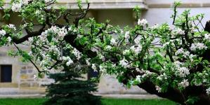 Parfum de primăvară