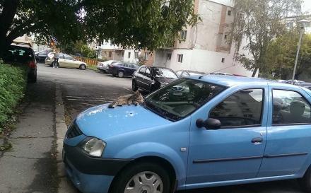 O lovitură puternică pentru Dacia România, pentru Mioveni, pentru România