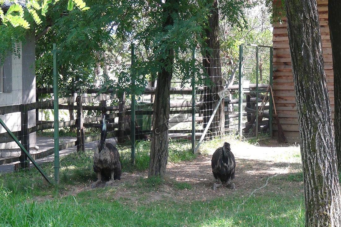 Zoo Vâlcea1