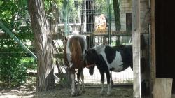 Documentar inedit despre Grădina zoologică din Râmnicu Vâlcea!