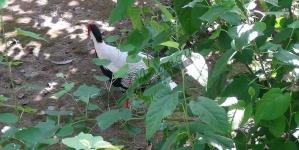 """Foto: O parte a """"junglei"""" la marginea Râmnicului!"""