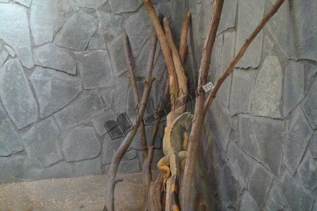Zoo Vâlcea2