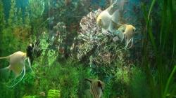 Gradina zoologică din Râmnicu Vâlcea, o frumuseţe necunoscută!