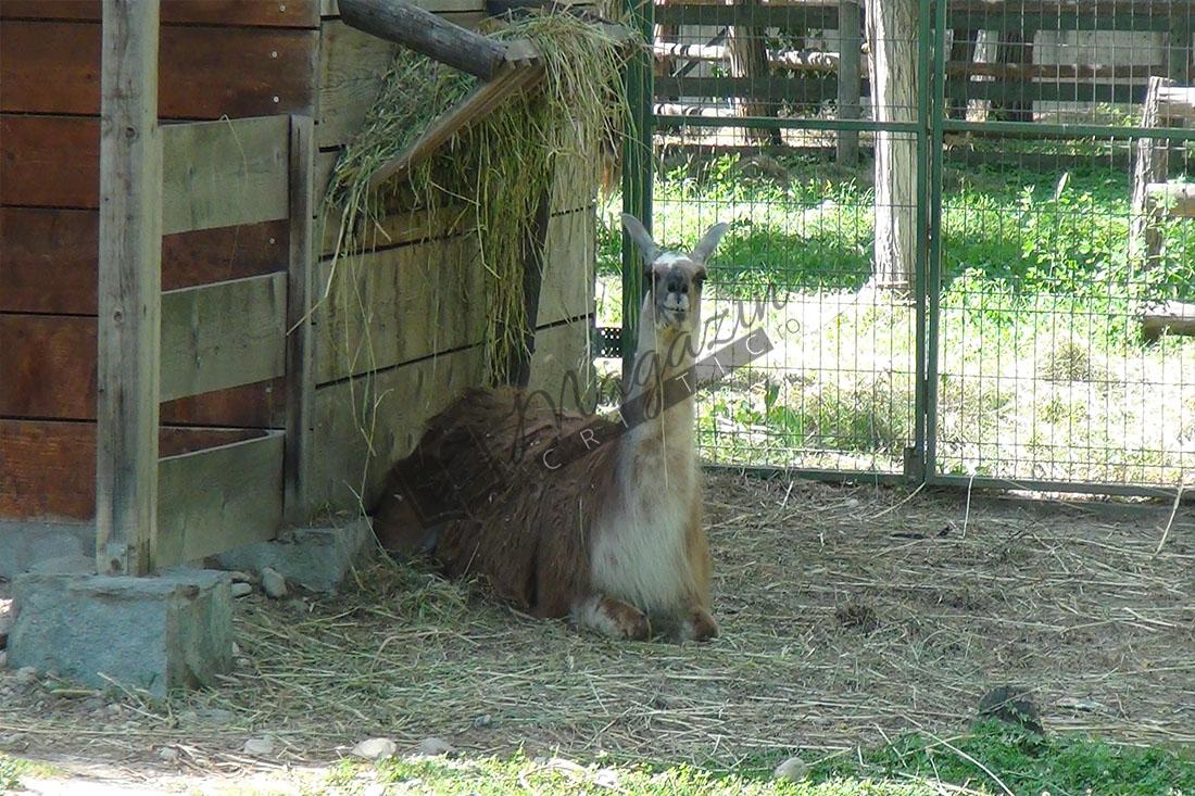 Zoo Vâlcea8