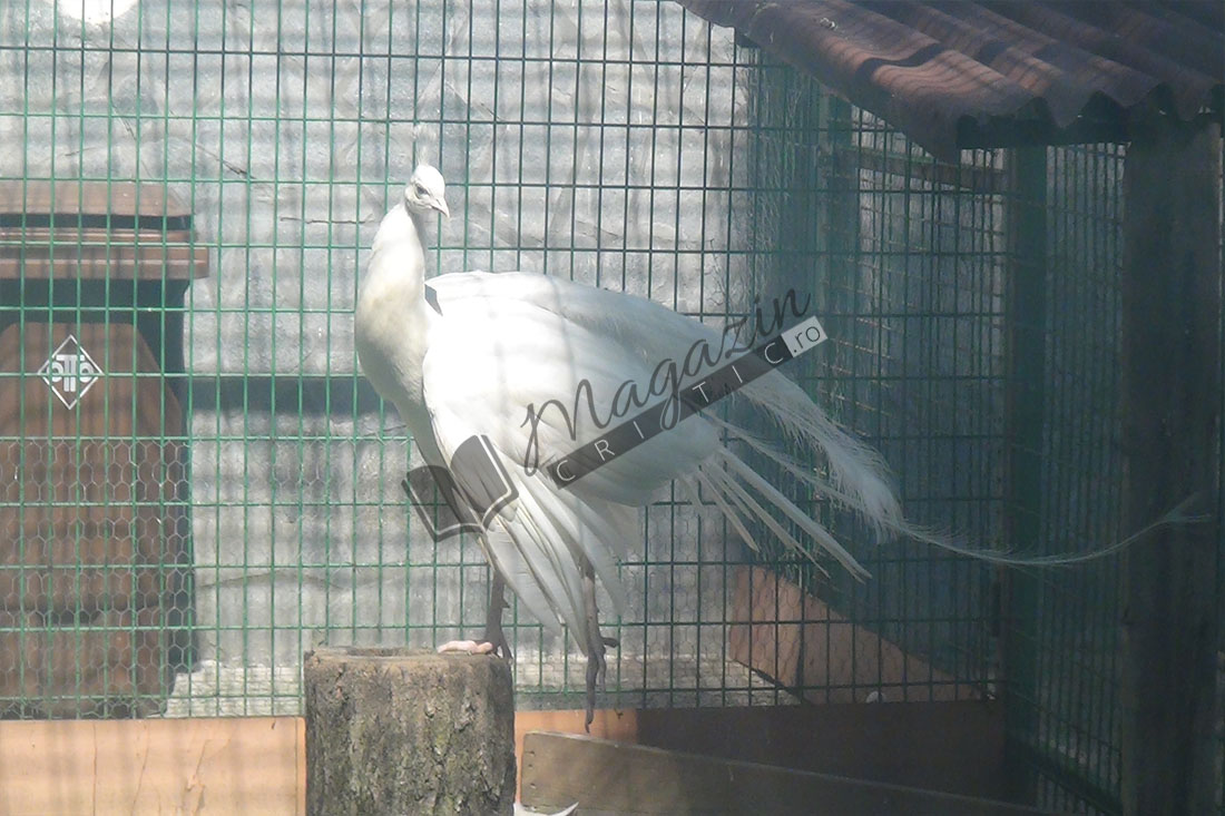 Zoo Vâlcea9