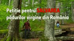 PETIȚIEA PENTRU SALVAREA PĂDURILOR VIRGINE DIN ROMÂNIA A DEPĂȘIT 16000 DE SEMNĂTURI!