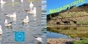Exclusiv: A apărut numărul 72 al revistei MAGAZIN CRITIC