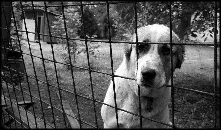 Drepturile și libertățile nu sunt pentru oameni? Să le mănânce câinii!